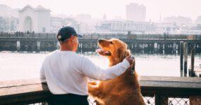 Mensch-Tier-Beziehungen und tiergestützte Interventionen